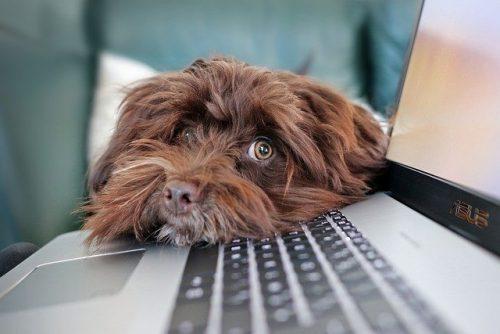 Imagen Portada Post Razones por las que procrastinar es horrible